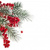 image of conifers  - Christmas fir twig with red berries  isolated on white - JPG