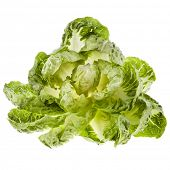 Cabbage Chinese Mini isolated on white background