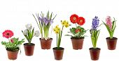 foto of flower pots  - Spring flowers  in the pot isolated on a white background - JPG