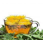 tea dandelion isolated on a white background