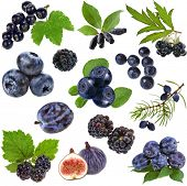 blue purple black berries and fruits collection ,  isolated on white
