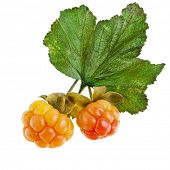cloudberry isolated on white