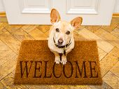 Podenco Dog Waiting For Owner To Play  And Go For A Walk On Door Mat ,behind Home Door Entrance And  poster