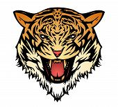 Tiger aggressive coloured (vector)