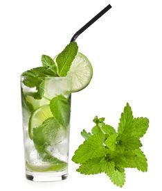 stock photo of alcoholic drinks  - Fresh mojito isolated on white background - JPG