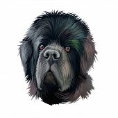 Newfoundland Dog With Big Muzzle Watercolor Portrait, Poster With Text. Digital Art Of Purebred Cani poster