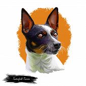 Tenterfield Terrier Dog Portrait Isolated On White. Digital Art Illustration, Animal Watercolor Draw poster