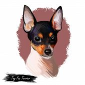 Toy Fox Terrier Dog Breed Portrait Isolated On White. Digital Art Illustration, Animal Watercolor Dr poster