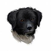 Wetterhoun Or Frisian Water Dog Breed Portrait Isolated On White. Digital Art Illustration, Animal W poster