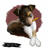 Majorca Ratter Puppy Watercolor Portrait Closeup Digital Art. Pet Domestic Animal Mammal Playing Wit poster
