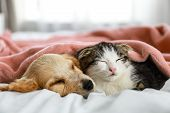 Adorable Little Kitten And Puppy Sleeping On Bed Indoors poster
