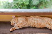 Orange Cat Tabby Feline Lying Resting On Table poster