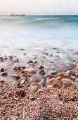 Pebble Beach Of Read Sea On Sunset