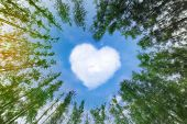 Heart Shaped Cloud Over Blue Sky Surrounded By Pine Trees. White Cloud In The Shape Of Hearts In The poster