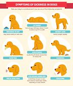 Sick Dog Symptoms Infographic Chart. Veterinary Canine Health Illustration In Cute Cartoon Style. poster