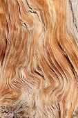 stock photo of contortion  - twisted and contorted distressed wood grain background texture - JPG