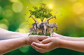 Concept Nature Reserve Conserve Wildlife Reserve Tiger Deer Global Warming Food Loaf Ecology Human H poster