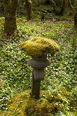 Musgo no jardim japonês