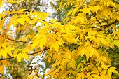 Natural Beauty With Visually Arresting Color. Branch With Autumn Foliage. Autumn Branch On Sky Backg poster