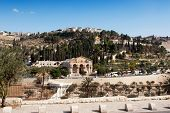 stock photo of gethsemane  - The Mount of Olives - JPG