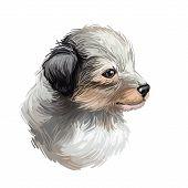 Shetland Sheepdog Purebred Domesticated Animal Digital Art. Canine Watercolor Portrait Closeup, Mamm poster