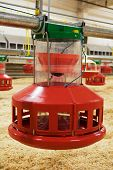 foto of hatcher  - Automatic feeding trough on a modern integrated poultry farm - JPG