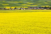 rural landscape - a village located at rape field