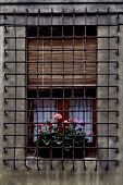 Grate  And Flowers
