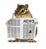 stock photo of chipmunks  - Funny chipmunk read newspaper  - JPG