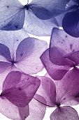 stock photo of violet flower  - colorful flower petal closeup - JPG