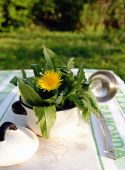 Plantas comestibles de las malas hierbas en una olla pequeña