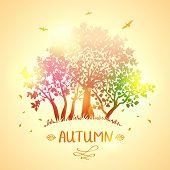 trees autumn