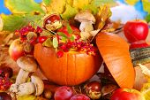 Autumn Harvest In The Pumpkin
