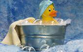 Single Duck In Tub
