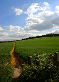 Straight Path Through Farmland