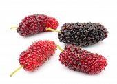 picture of mulberry  - Fresh mulberry  fruit  isolated on white background - JPG