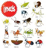stock photo of locust  - Set of vector insects - JPG