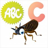 C is for Cicada