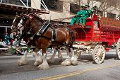 Budweiser Clydesdales Make Appearance In St. Patrick's Parade