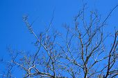 Bare Tree Limbs With New Buds On Southern Barrier Island