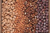 Background Of Different Varieties Of Nuts
