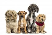stock photo of cross-breeding  - Group of Crossbreed sitting and looking - JPG