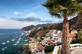 Catalina Island Resort And Avalon Bay