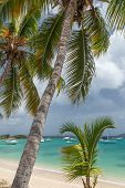 stock photo of u-boat  - Palm trees along the shore of Cruz Bay in St - JPG