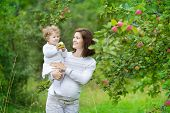 Beautiful Young Pregnant Woman And Her Laughing Baby Daughter Picking Apples In An Autumn Garden