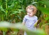 Adorable Baby Girl With Blond Curly Hair Playing In A Corn Field