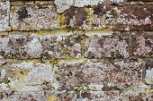Weathered Brick Wall Covered In Lichen
