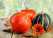 Colorful Pumpkins On Green Natural Background