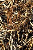 Brown Dry Grass Herb Texture