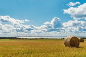 picture of confederation  - Hay bales on a farm along the ocean with the Confederation Bridge in the background  - JPG
